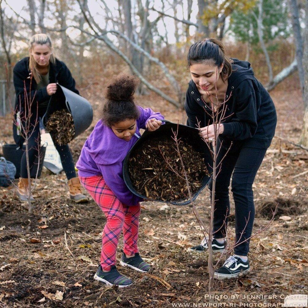 Volunteers assist with tree mulching at Morton Park, Newport, R.I.